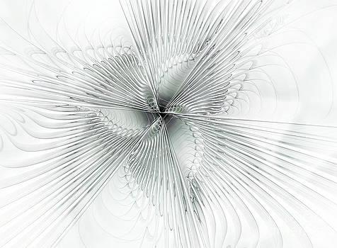 Silver Spiderwort by Nan Engen