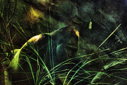 Joe Bledsoe - Silverback Color