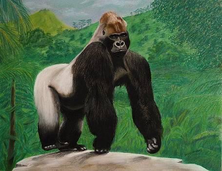 Silverback Gorilla by David Hawkes