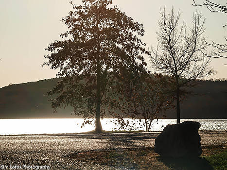 silvery Autumn  by Kim Loftis