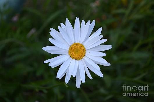 Simple Beauty by Kiana Carr