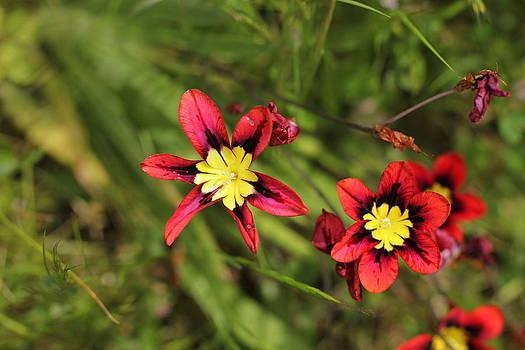 Simple Flower by Anna Schydlo