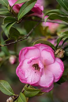 Simple Flower by Jon Cody