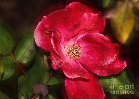 Deborah Benoit - Simple Rose