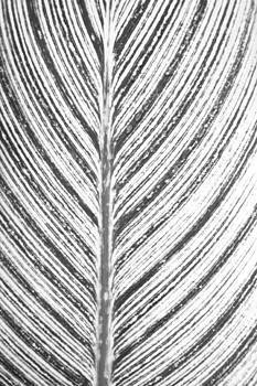 Marilyn Hunt - Simple Stripes 2