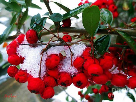 Simple Winter Berries  by Lisa Jones