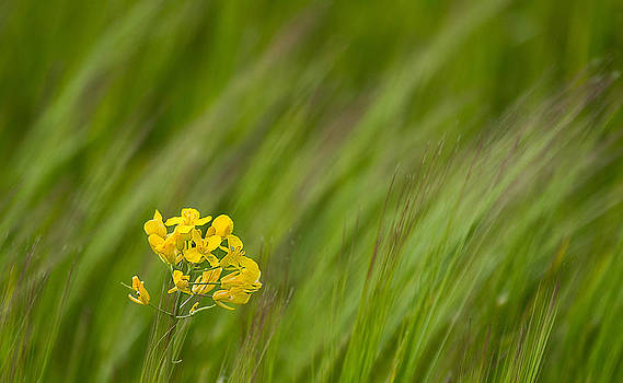 Simple yellow in a sea of green by Mr Bennett Kent