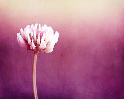 Carolyn Cochrane - Simplicity