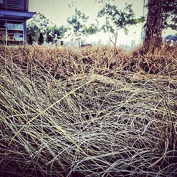 ...simplistic Elegance (22) #plants by Tyrone Stokes