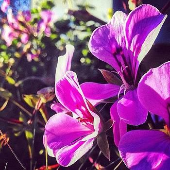 ...simplistic Elegance (27) #flowers by Tyrone Stokes