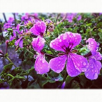 ...simplistic Elegance (32) #flowers by Tyrone Stokes
