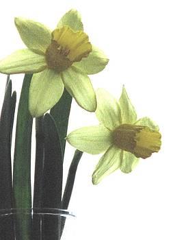 Angela Davies - Simply Daffodils