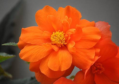 Simply orange by Heather L Wright