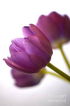 Simply Purple by Deb Halloran