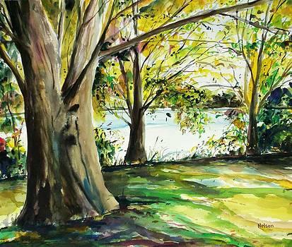 Singeltary Shade by Scott Nelson