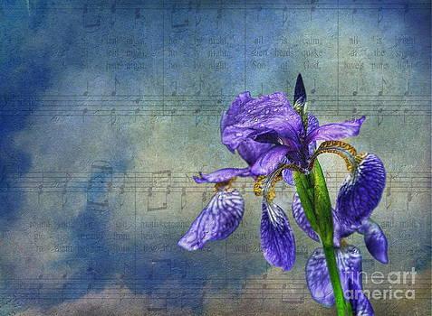 Singing in the Rain by Andrea Kollo
