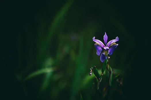 Karol Livote - Single Bloom