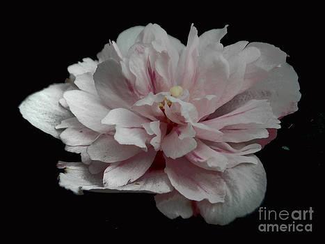 Single Flower by Annette Allman