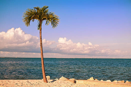 Single Palm Tree At Tampa Bay by Sharon Dominick