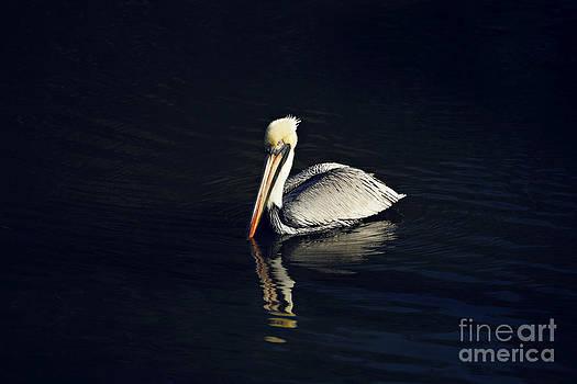 Single Pelican by Joan McCool
