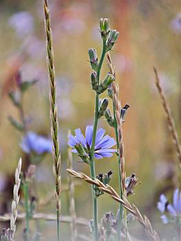 Single Purple Flower by Robin Hewitt