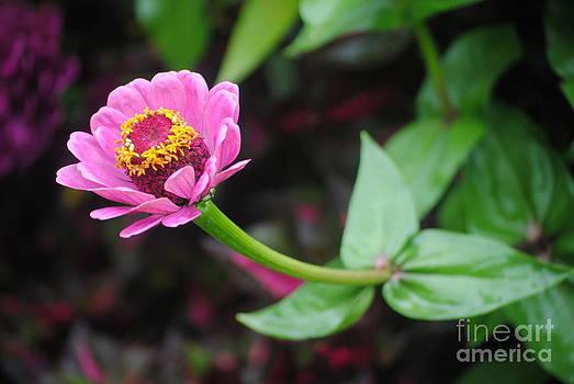 TChamberlin Photography - Single Purple Flower
