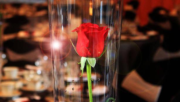 Single Rose by Stephanie Leidolph