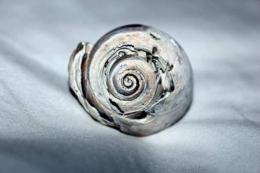 Single Shell by Brandi Perry