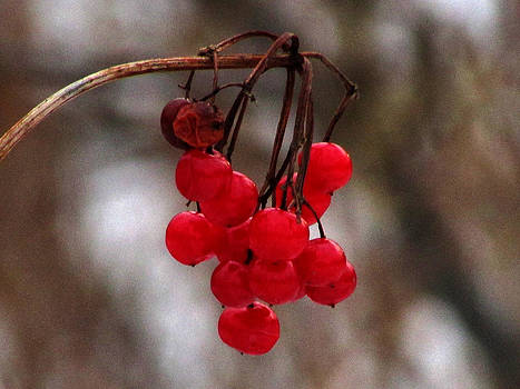 Single Strand of Berries by Kimberly Mackowski