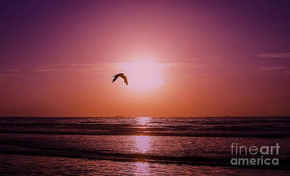 Single Sunrise by Jerry Hart