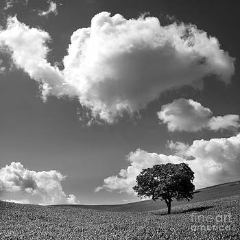 BERNARD JAUBERT - Single tree. Auvergne. France