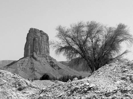 Single Tree by Heather Gordon