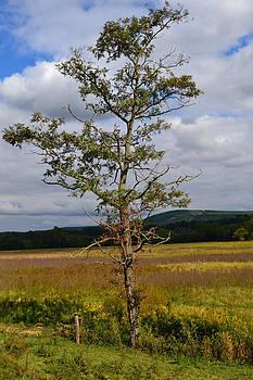 Single tree by Renee Braun