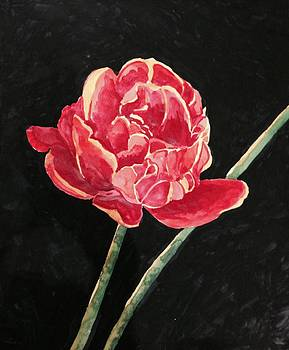 Single Tulip on Black Background by Cristel Mol-Dellepoort
