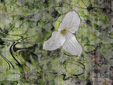 Single White Trillium by Claire Bull
