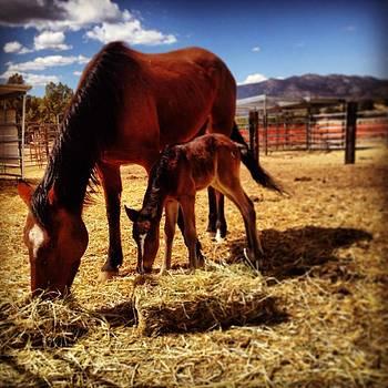 Sizzle by Wynema Ranch