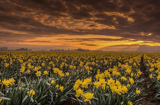 Puget  Exposure - Skagit Valley Sunrise