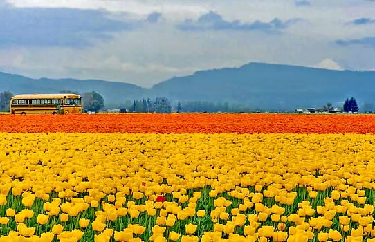 Peggy Collins - Skagit Valley Tulip Field