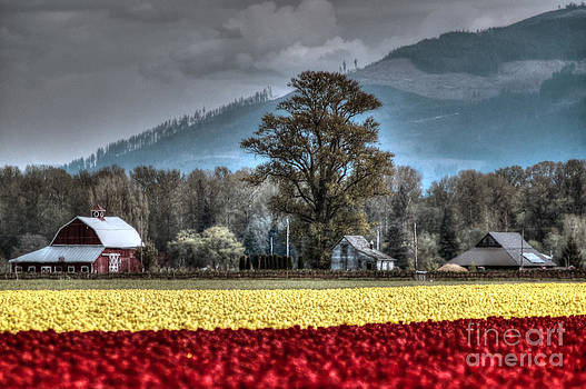 Skagit Valley Tulips by Sylvia Blaauw