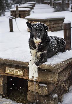 Pam  Elliott - Skeeter the Sled Dog