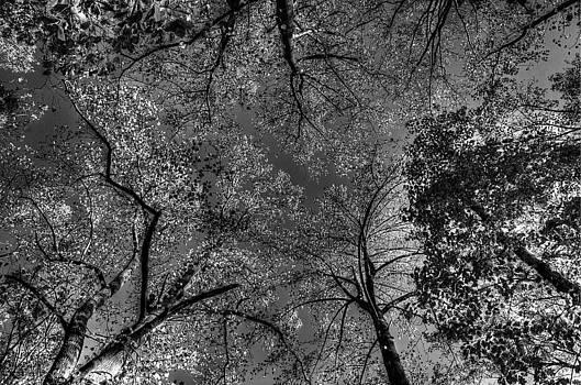 Skeletal Sky by Lucia Vicari