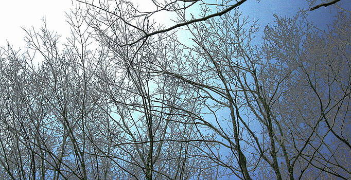 Skeleton Trees in Sweeping Blue by Stephen Melcher