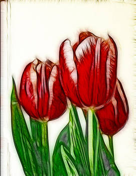 Maria Holmes - Sketched Tulips