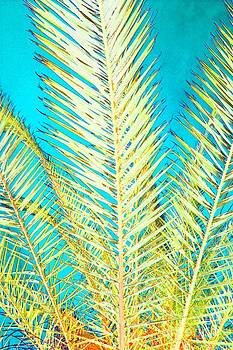 Sketchy Palm Fronds by Jeanne Forsythe