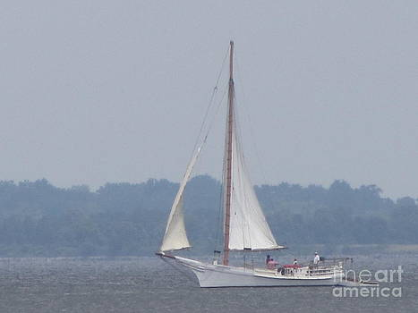 Skipjack on the Bay  by Debbie Nester