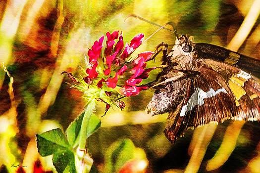 Barry Jones - Butterfly - Clover - Skipper on the Prowl