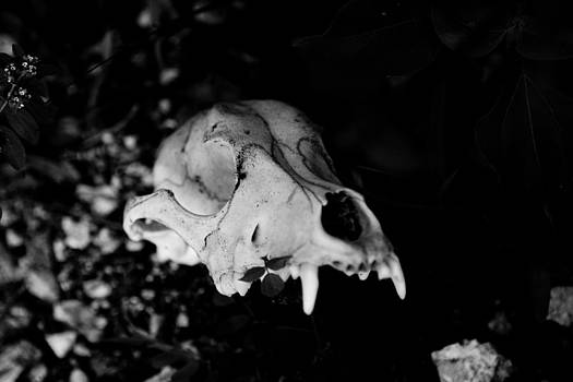 Skull by Joep K