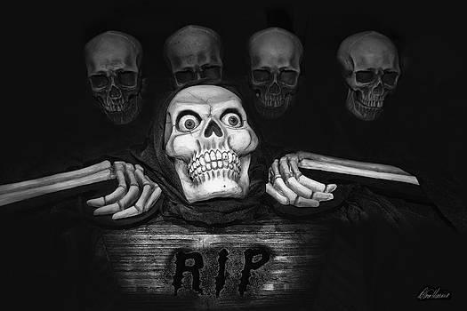 Diana Haronis - Skulls