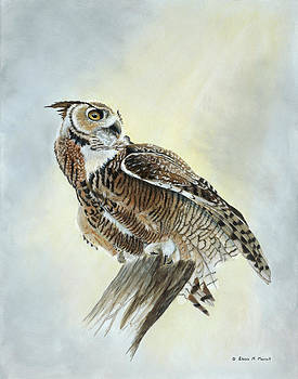 SKY HUNTER-Great Horned Owl by Patricia Mansell