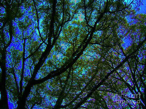 Sky Melt by Drew Shourd